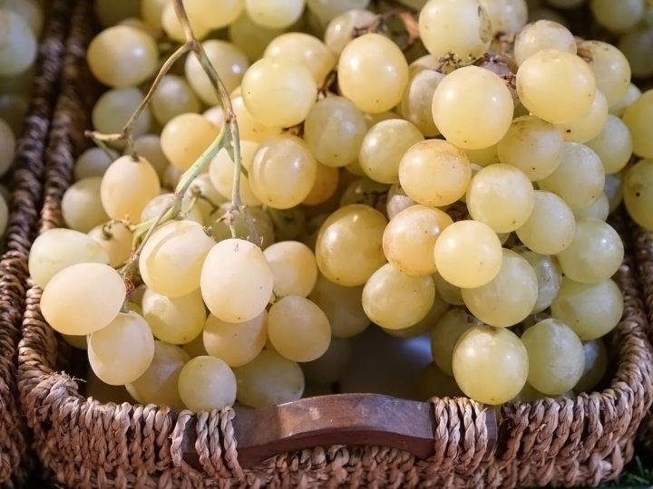 Tumori, cure più efficaci con i semi dell'uva